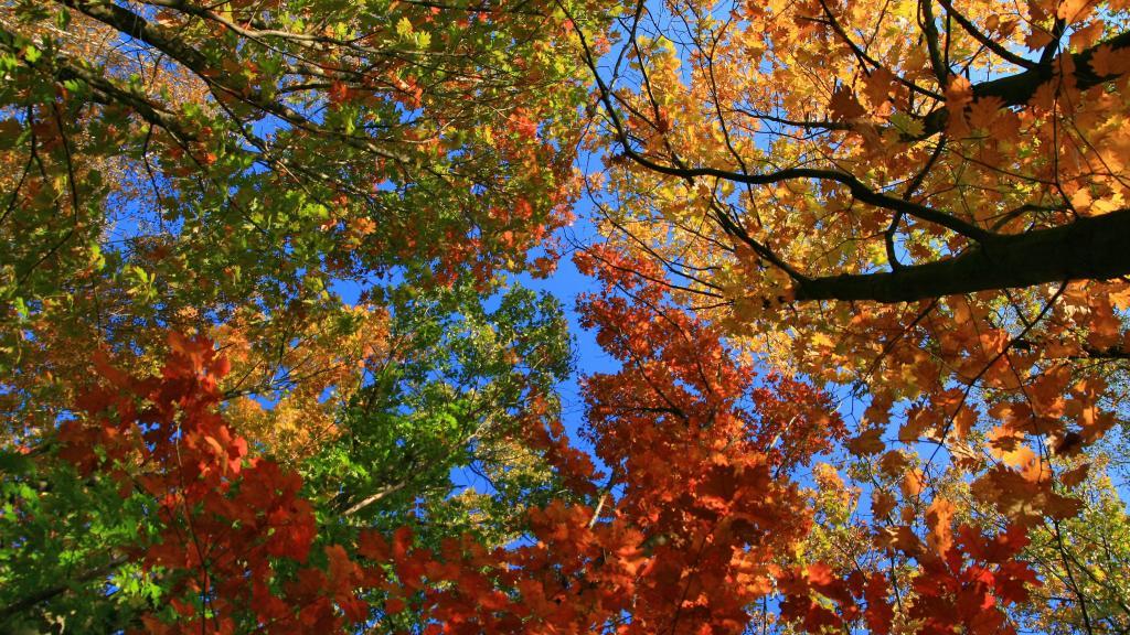 Стихдня - Осень