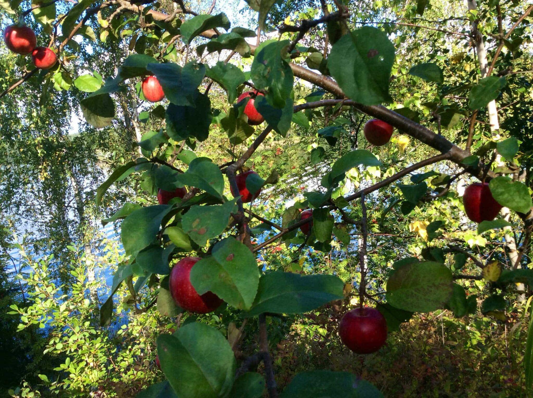 Yhteyden ihmeellisiä hedelmiä