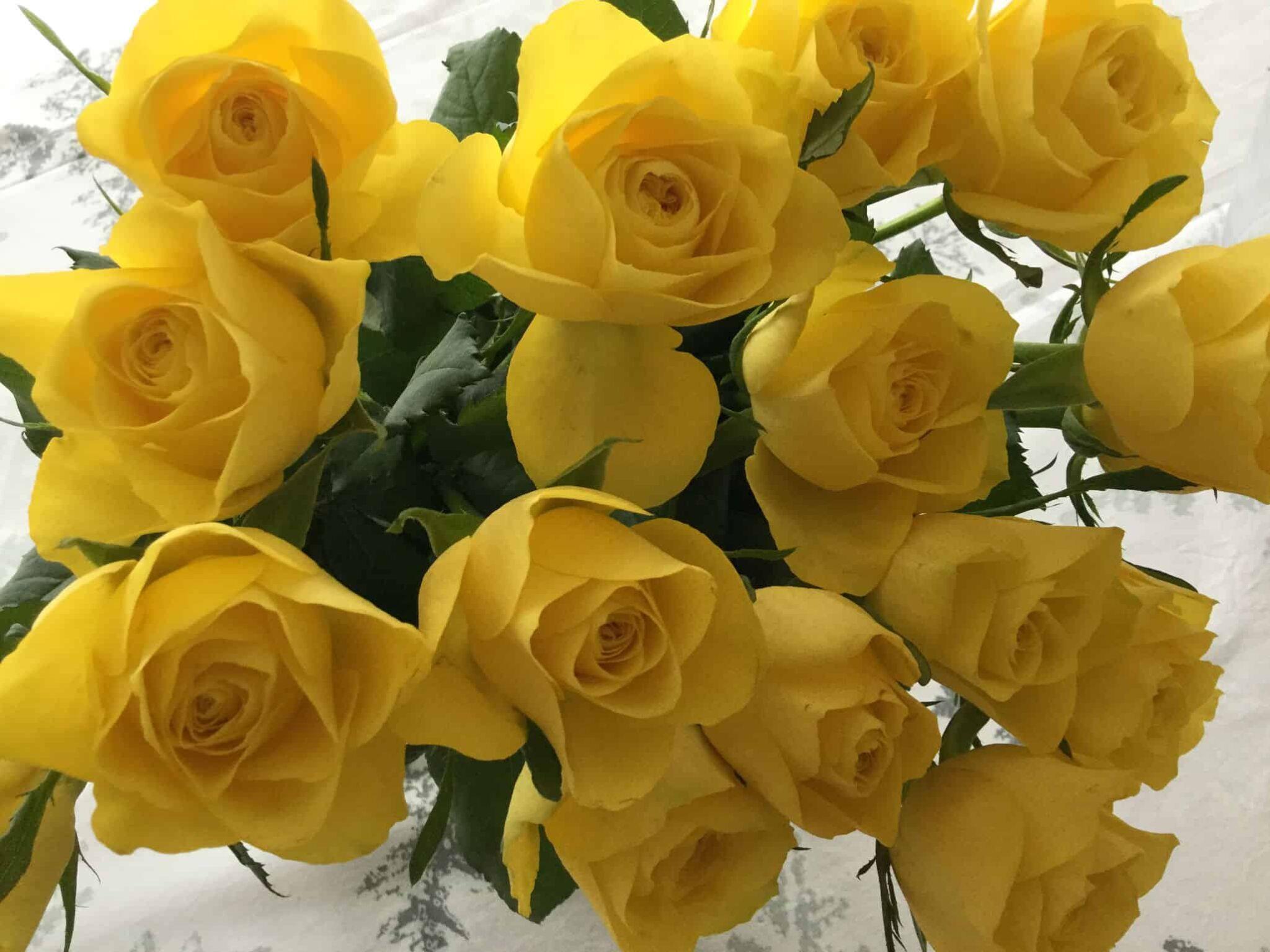 Ruusuja ystävilleni